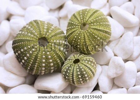 Sea urchin shells on pebbles - stock photo
