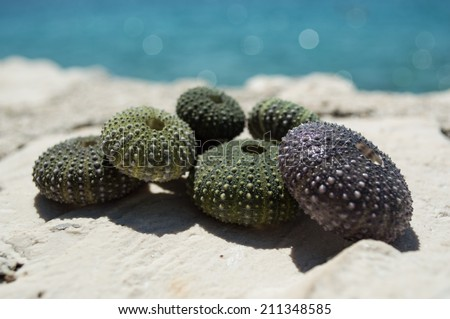 Sea urchin shells on rock with sea in background   - stock photo