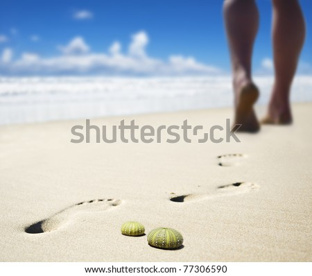 Sea urchin shells with the calves of someone walking on the beach in the background - stock photo