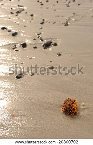 Sea urchin washed up on the sand - stock photo