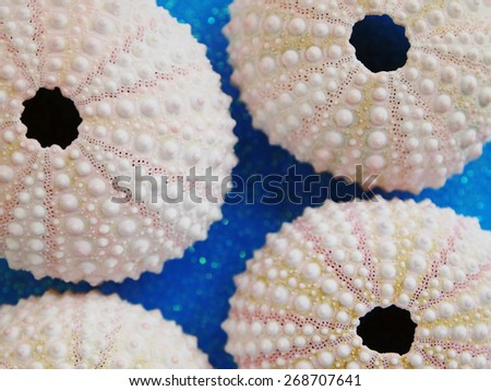 Sea Urchins against blue background - stock photo