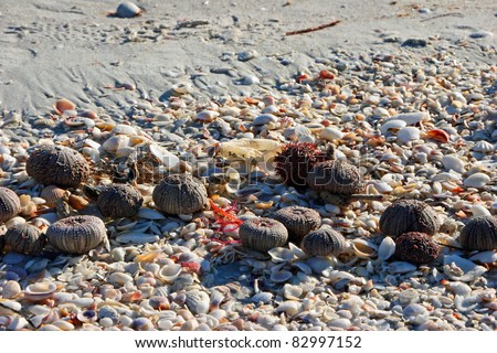 Sea Urchins And Sea Shells On Beach - stock photo