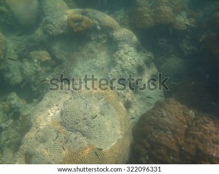Sea Urchins, Small Spiny Globular Animals, on Coral Reef under the Sea                               - stock photo