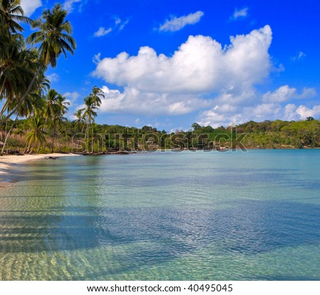 Sea water under palm tree on the tropical beach, summer nature and holiday