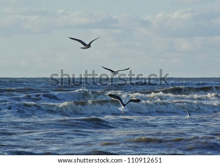 Sea with seagulls in The Netherlands. - stock photo