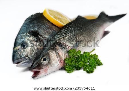 Seabas and sea bream on white background - stock photo
