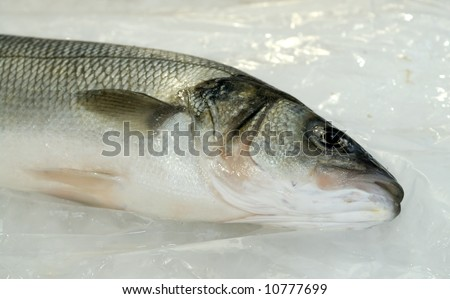 Seabass, bass-fish at the local market