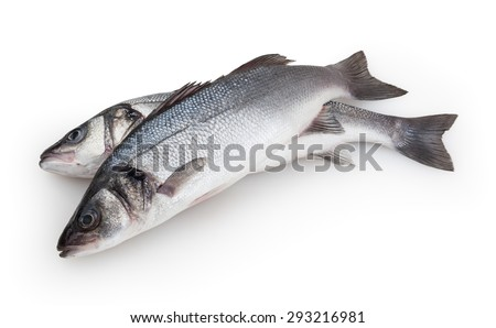 Seabass isolated on white background with clipping path - stock photo