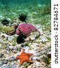 Seabed with hard coral, long spined urchin and a starfish, Caribbean sea, Panama - stock photo