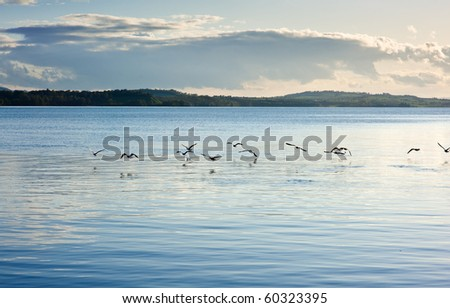 seabird flying above the lake surface