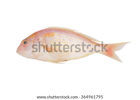 Seabream fish isolated on white background - stock photo