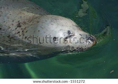 seadog - stock photo