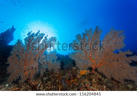 Seafan and sunbeam on moyo island in indonesia - stock photo