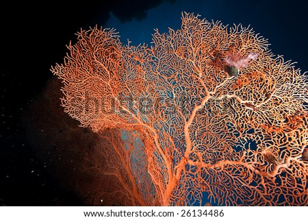 seafan, ocean and fish - stock photo
