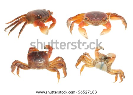 seafood animal crab set collection isolated on white - stock photo