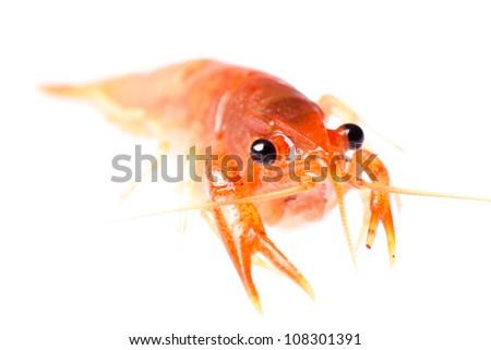 seafood animal crawfish shrimp - stock photo