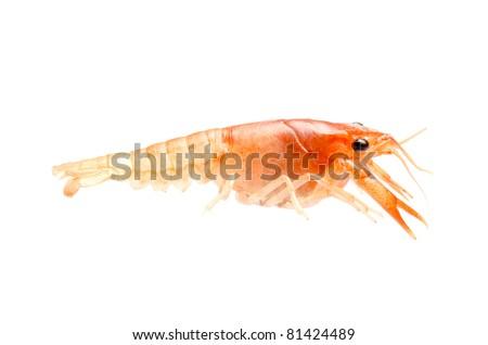 seafood crayfish shrimp isolated on white - stock photo