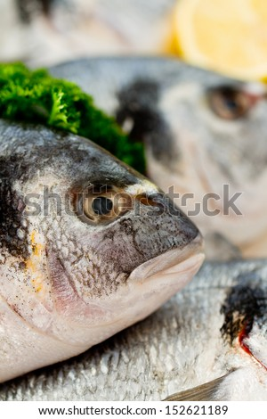 Seafood, fish - fresh sea bream in ice, healthy food