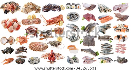 seafood, fishes and shellfish in front of white background