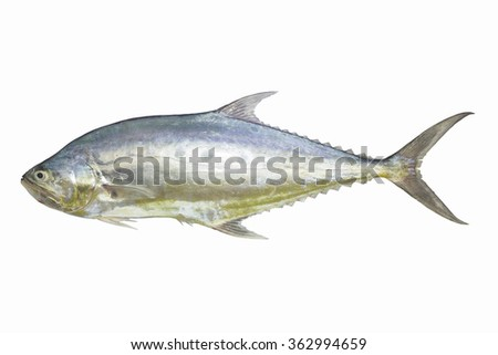 seafood,tailing queen fish isolate on white background,Fish fresh and tasty