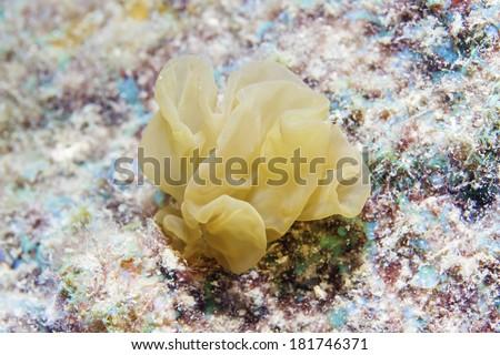 seagrass - stock photo
