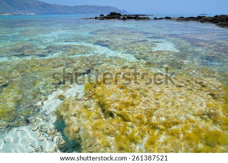 Seagrass near the Elafonisi beach on the island of Crete, Greece - stock photo