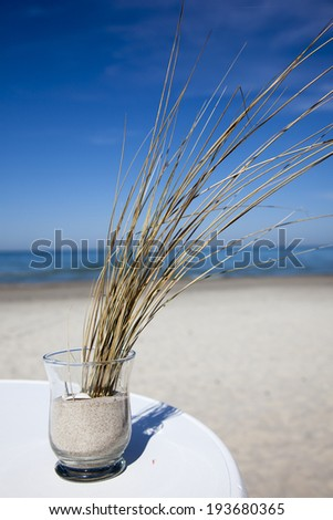seagrass with blue sky on the beach - stock photo
