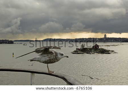 Seagul in front of  Helsinki harbour, Finland. - stock photo