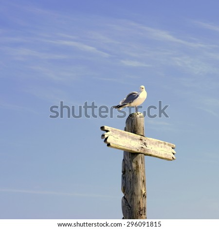seagul on wooden stake 1 - stock photo