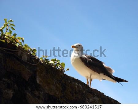 stock-photo-seagull-683241517.jpg