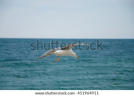 Seagull against a beautiful sky with clouds. Nature composition. Place for text