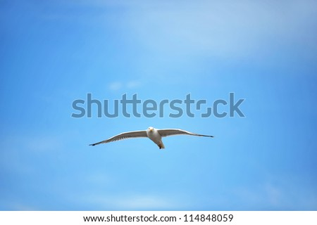 Seagull against blue sky and clouds - stock photo