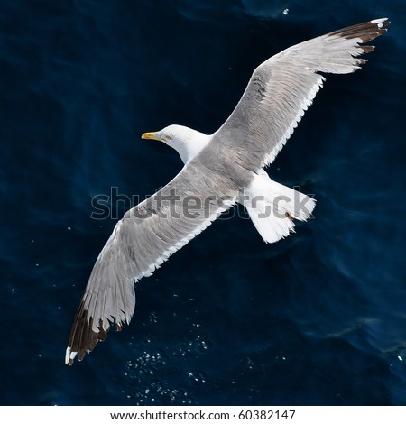seagull and dark blue water surface - stock photo