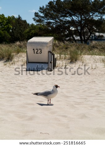 Seagull and hooded beach chair  - stock photo