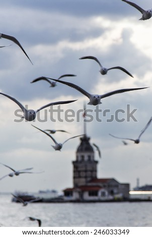 seagull and Maiden's Tower  - stock photo