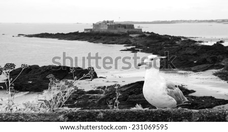 Seagull and wild flowers on the ramparts of Saint Malo and the view on Fort National (on a tidal island). Brittany, France. Selective focus on the gull. Aged photo. Black and white. - stock photo