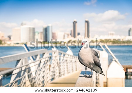 Seagull at San Diego waterfront with skyline view - Skyscrapers from Coronado Island in California - United States - stock photo