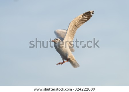 Seagull bird flying in the blue sky