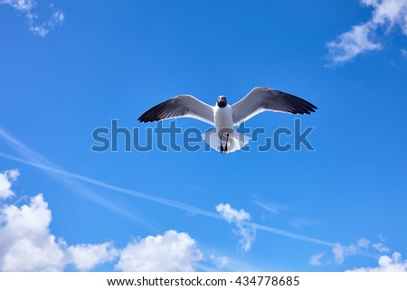 Seagull bird flying in the blue sky - stock image