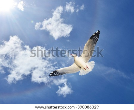 Seagull bird showing wing spread in flight on blue sky background  - stock photo