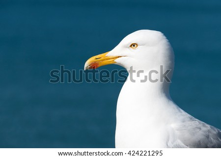 Seagull bird with blue sea background. - stock photo