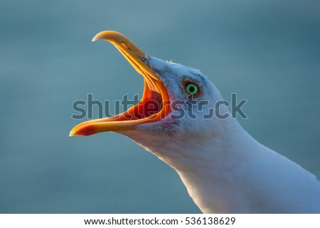 Seagull cries over the sea