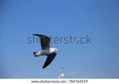 seagull expanded its wings soaring high in the blue sky in winter