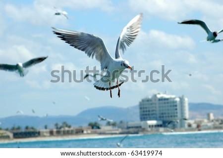 seagull flies - stock photo