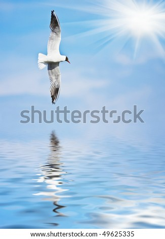 seagull flies against a background of blue sky and clouds - stock photo