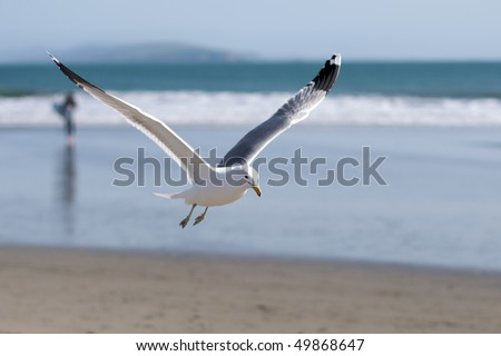 seagull flies near the water's edge - stock photo