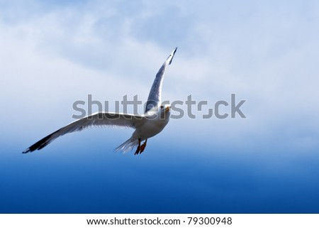 seagull flying above blue sea - stock photo