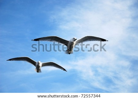 Seagull flying against a blue sky - stock photo