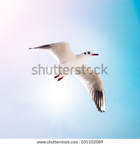 seagull flying against the blue sky - stock photo