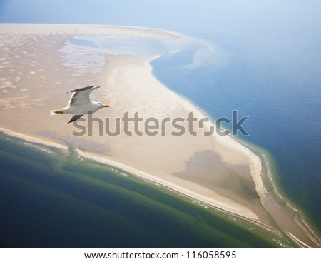 Seagull flying at beach near Texel, The Netherlands - stock photo